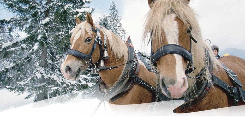 Winter-Pferdeschlittenpfad